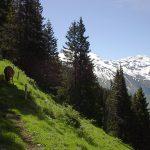 marbachwanderung-2004